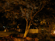 Tree_at_night_3