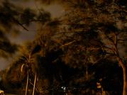 Trees_1_1