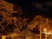 Trees_2_1